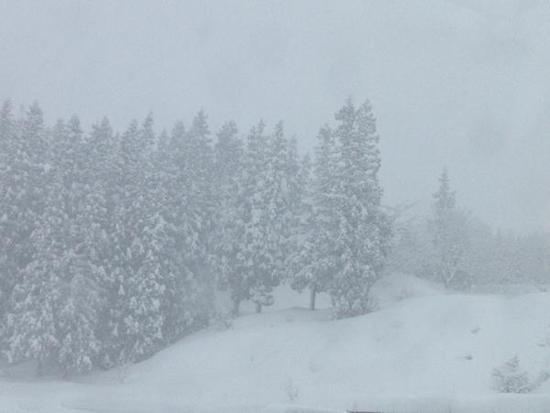 一日中パウダー|上越国際スキー場のクチコミ画像