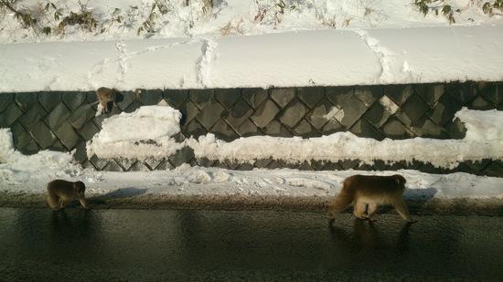 ブラボー!雪&サル♪|志賀高原リゾート中央エリア(サンバレー〜一の瀬)のクチコミ画像3