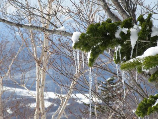 今シーズン一番の天気|KIRORO SNOW WORLDのクチコミ画像2
