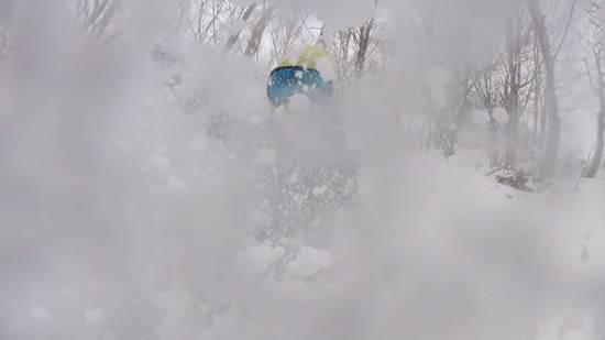 パウダーにまみれて最高|栂池高原スキー場のクチコミ画像