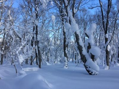 やっと八甲田らしい 八甲田スキー場のクチコミ画像