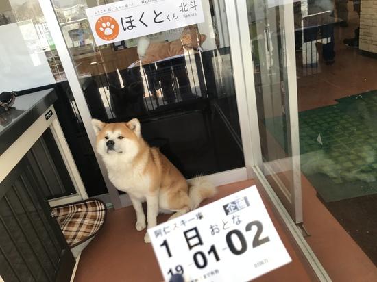 看板犬|阿仁スキー場のクチコミ画像