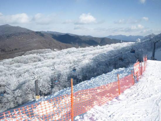 真冬の朝に花見|軽井沢プリンスホテルスキー場のクチコミ画像