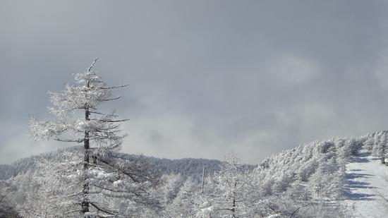 雪質良いです。|川場スキー場のクチコミ画像
