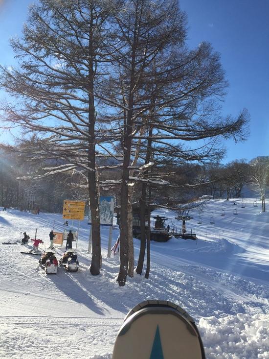 看板埋もれて触れます|野沢温泉スキー場のクチコミ画像