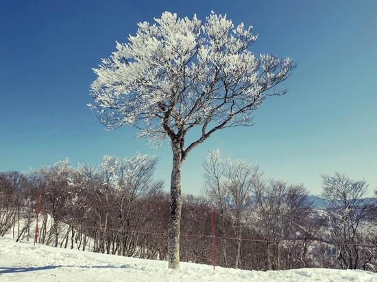 多彩なコース|野沢温泉スキー場のクチコミ画像2