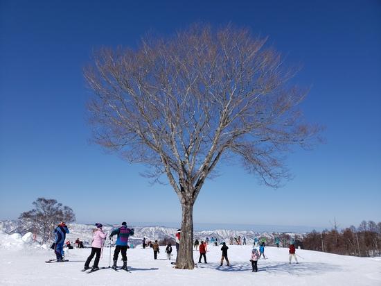 多彩なコース|野沢温泉スキー場のクチコミ画像3