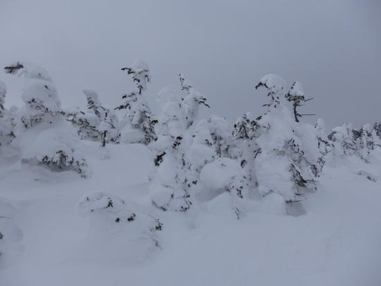 ツアー的にまわってきました|志賀高原 熊の湯スキー場のクチコミ画像2