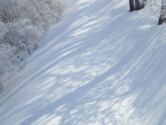 前日に降った雪でゲレンデ綿菓子のよう|軽井沢プリンスホテルスキー場のクチコミ画像