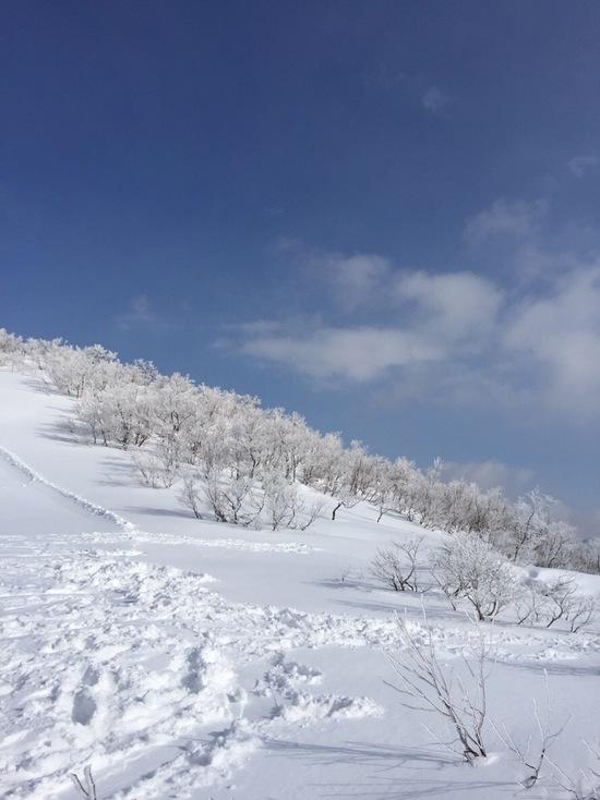 パウダー|スキージャム勝山のクチコミ画像
