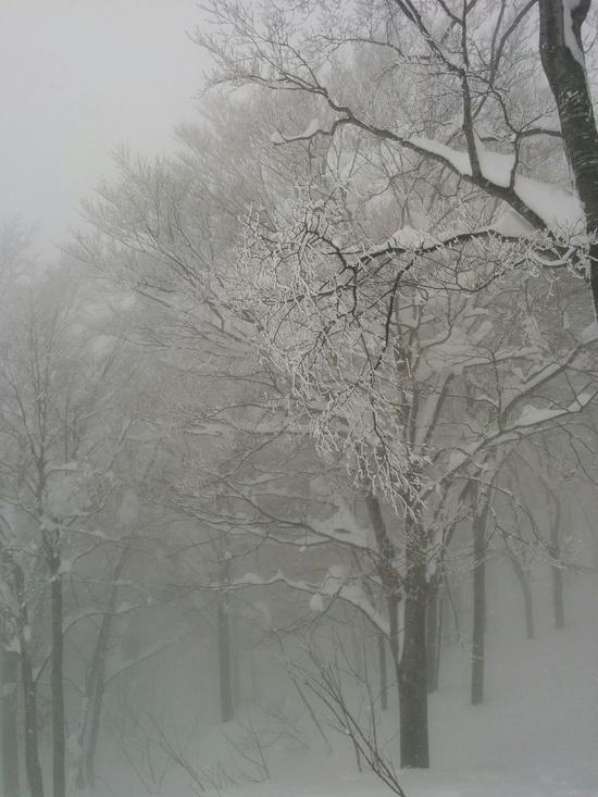 雪は重かった|六日町八海山スキー場のクチコミ画像
