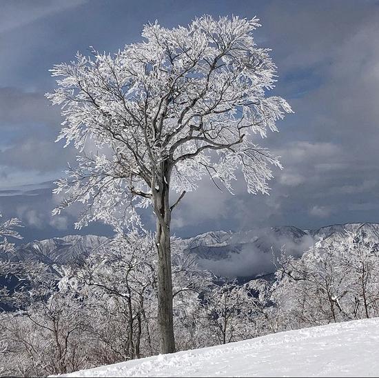 雪化粧|スキージャム勝山のクチコミ画像