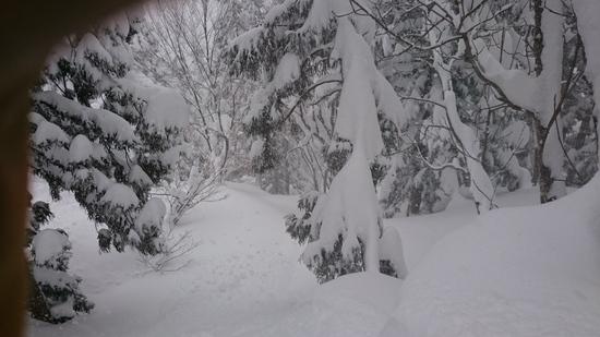 やっぱり八海山|六日町八海山スキー場のクチコミ画像