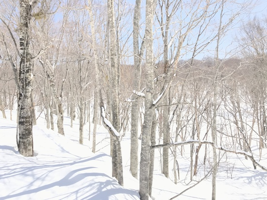 春と冬の間に|たんばらスキーパークのクチコミ画像
