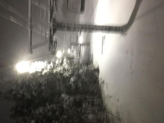 ようやく降雪! スプリングバレー泉高原スキー場のクチコミ画像1