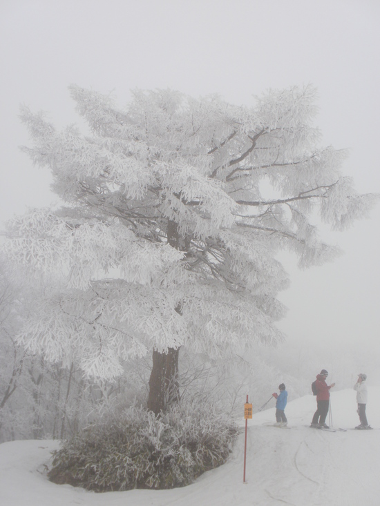 この時期にして樹氷|Hakuba47 ウインタースポーツパークのクチコミ画像