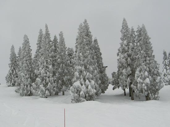 ビギナーでも楽しめるスキー場 上越国際スキー場のクチコミ画像