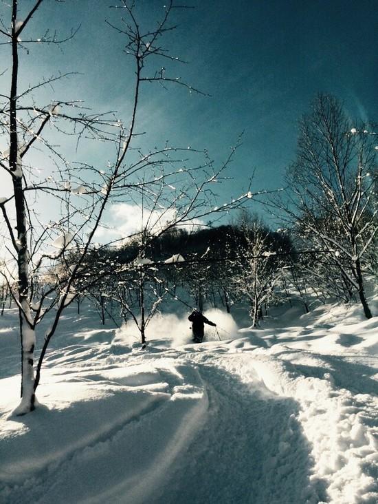 Powder trip 飛騨ほおのき平スキー場のクチコミ画像3