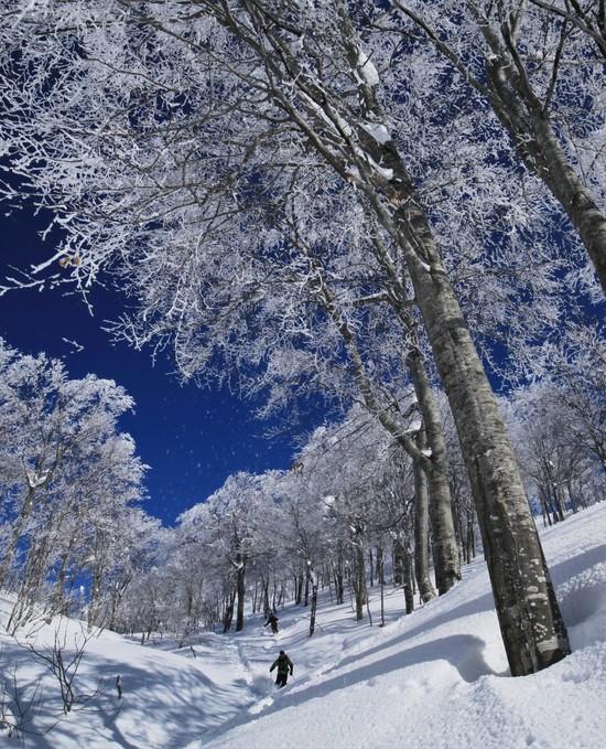 新雪爽快!|六日町八海山スキー場のクチコミ画像