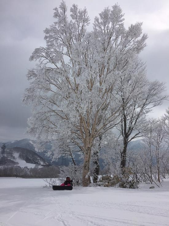 広いバーンが初心者むき|かぐらスキー場のクチコミ画像