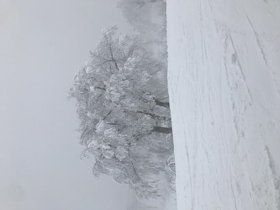 野沢温泉スキー場旅行 野沢温泉スキー場のクチコミ画像