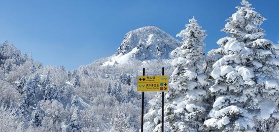 志賀高原 熊の湯スキー場のフォトギャラリー1