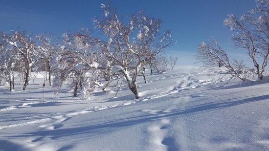 2/07,08久々のジャム勝はやっぱり人気でね。|スキージャム勝山のクチコミ画像