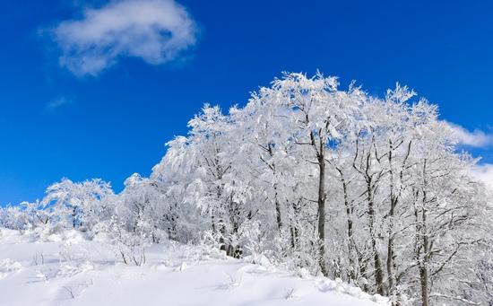 青空と樹氷|スキージャム勝山のクチコミ画像