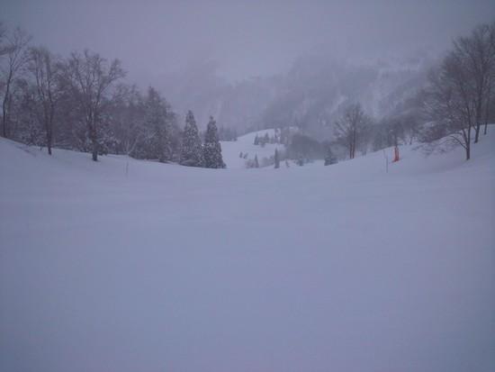 降ってるからこそ|GALA湯沢スキー場のクチコミ画像