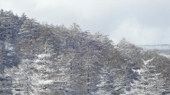 だいぶ積もってました。|車山高原SKYPARKスキー場のクチコミ画像