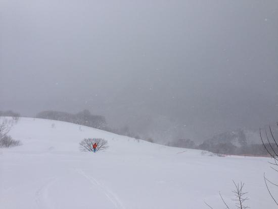 コース横の平らな平原を探険するのが意外と楽しい 黒伏高原スノーパーク ジャングル・ジャングルのクチコミ画像