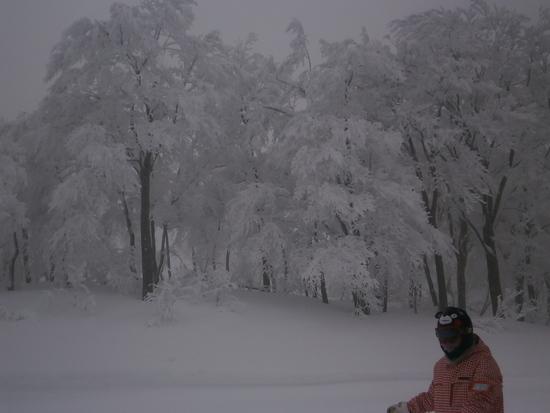 ロングコース スキージャム勝山のクチコミ画像