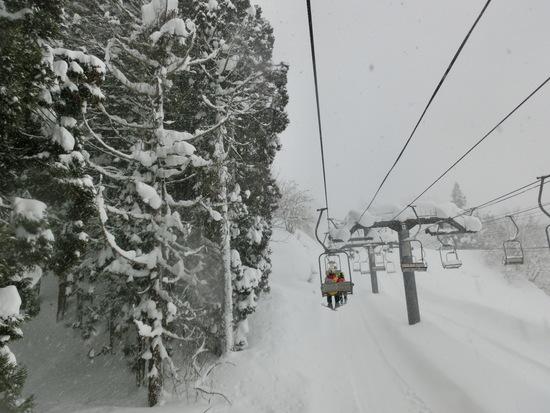 雪降りました|上越国際スキー場のクチコミ画像