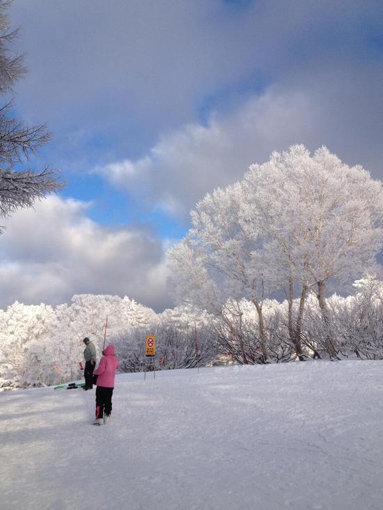 パウダースノー|野沢温泉スキー場のクチコミ画像