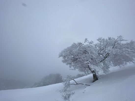奥神鍋スキー場のフォトギャラリー3