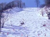 今シーズンはピンチ|しらかば2in1スキー場のクチコミ画像