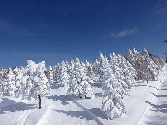 雪一色|竜王スキーパークのクチコミ画像3