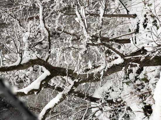 今シーズン 初滑り!|グランデコスノーリゾートのクチコミ画像2
