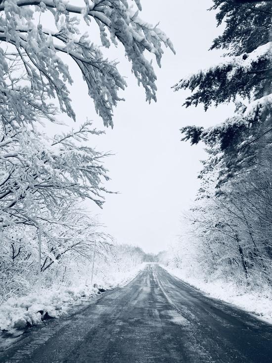 雪道  と  雪ボッコ犬|あだたら高原スキー場のクチコミ画像1