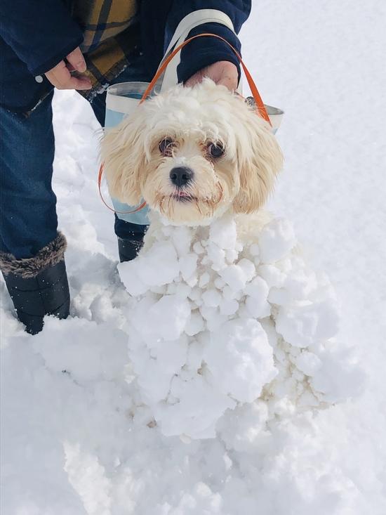 雪道  と  雪ボッコ犬|あだたら高原スキー場のクチコミ画像2