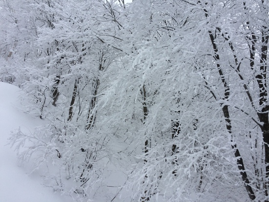 毎年、数回利用していますが・・・|タングラムスキーサーカスのクチコミ画像2