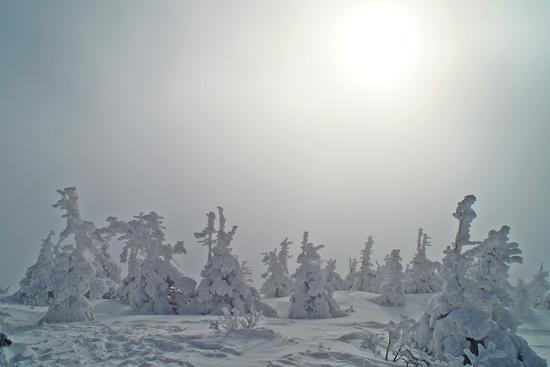 樹氷はまだまだ。 八甲田スキー場のクチコミ画像