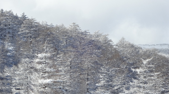満足感の高いスキー場です!!|ハンターマウンテン塩原のクチコミ画像