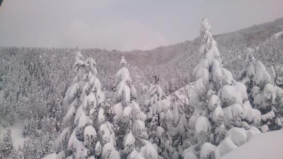 3月2週目の雪質ではない!(良好)|スキージャム勝山のクチコミ画像2