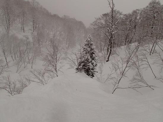 1日中パウダースノー|かぐらスキー場のクチコミ画像