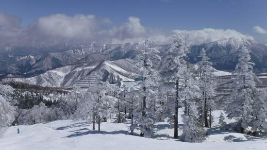 雪がある(木) かぐらスキー場のクチコミ画像