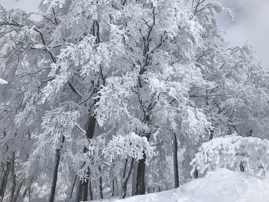残照|スキージャム勝山のクチコミ画像3