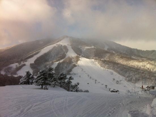 ツリーラン天国|斑尾高原スキー場のクチコミ画像