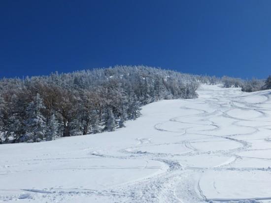 雪質最高|天元台高原のクチコミ画像2