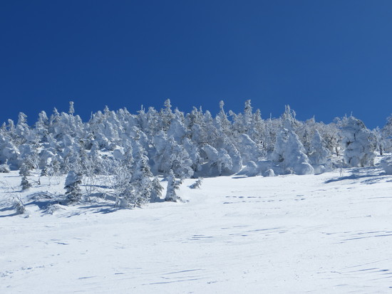 雪質最高|天元台高原のクチコミ画像3